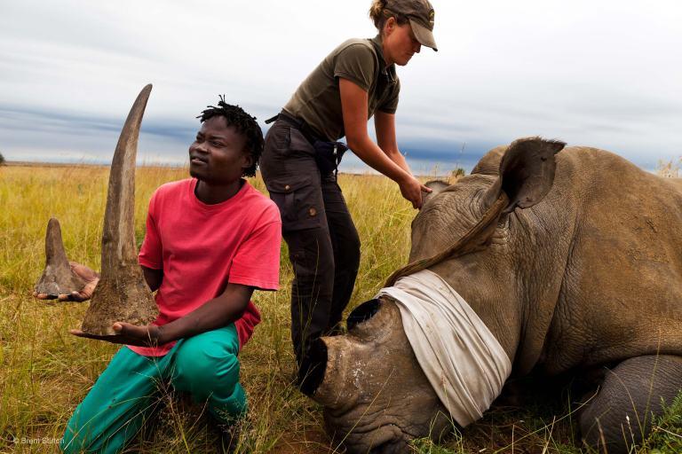 nhmwpy Rhino dehorning