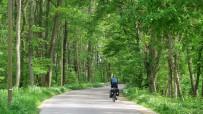 Spinning away through a German wood. Somewhere near Leipheim.