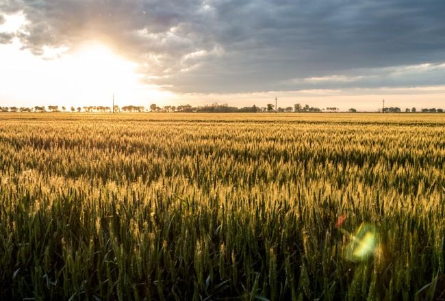 Sunrise from a barley field just outside Odzaci, Serbia