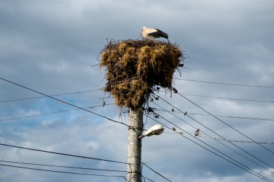 A stork checking the electrical wiring on the pylons. 100km into Bulgaria.