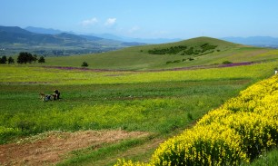 The final stretch into Tbilisi became much prettier and sunnier. A great view across the fields of the smaller mountains to the south.