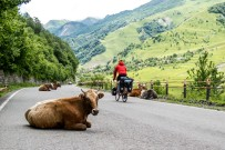 The cows, sheep and goats love crowding the roads. The cows in particular move for no one.