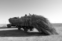 Overloaded with the harvest. Looks like a comfy ride up there.