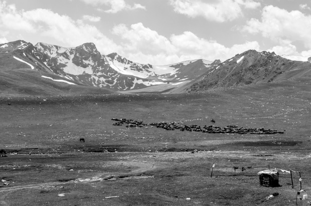 Horsemen herding their sheep across the hills. Kyrgyzstan.
