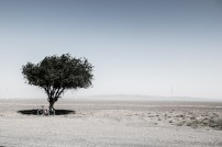 The lone tree in 100's of km of sand. Heading for Zharkent, Kazakhstan.
